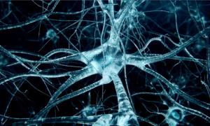 Chữa rối loạn thần kinh thực vật bằng y học cổ truyền